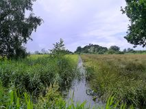 Small waterway in marshland Royalty Free Stock Photography