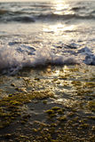 Waves Crushing on Seaweed Rock. Small wave crushing against a wet rock covered with algae Royalty Free Stock Photos