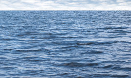 Small waves on pure blue sea water with cloudy sky. On horizon Stock Photography