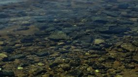 Small waves on a rocky bottom stock video footage