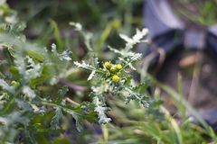 small weeds instead of snow in my garden in januar Stock Image