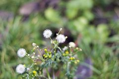 Small weeds instead of snow in my garden in januar Stock Photo