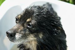 A small and wet dog with a sad glance, a wonderful dog photo on a sunny day Royalty Free Stock Image