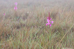 Small wet pink flower macro in early morning fog Stock Image