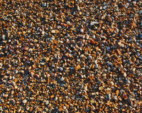 Small wet stones. Background pattern of small wet pebbles on the beach royalty free stock image