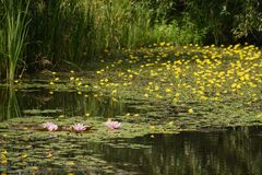 Flowering wetlands on the outskirts of Prague Royalty Free Stock Photos