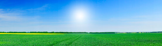 Small wheat , beautiful colza  and blue sky . Royalty Free Stock Image