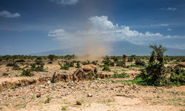 Small whirlwind with donkey Stock Images