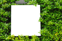 Small white board with  a green leaf . Small white board white  a green leaf Royalty Free Stock Images