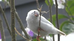 Small white bord stock video footage