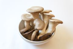 Small white bowl of Pleurotus eryngii King Trumpet Mushrooms and Pleurotus ostreatus Oyster Mushrooms. Isolated on white, food ingredients, horizontal aspect Stock Photo