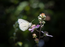 A small white butterfly on flower Stock Photo