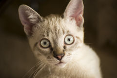 Small white cat Stock Photography