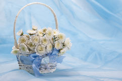 Small white chrysanthemums in a white basket Royalty Free Stock Images