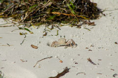 Small crab on sand beach Stock Photo