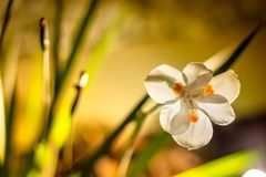 Small White Delicate Flower in detail with background garden stock photo