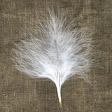 Small white feather on the natural material. Original natural background Royalty Free Stock Photos