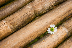 Small white flower on bamboo Stock Image