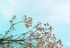 Small white flower Royalty Free Stock Photo