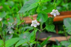 Small white flower with a green background.  Stock Photography