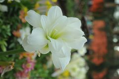 Small white flower. Inside flower dome singapore Royalty Free Stock Photos