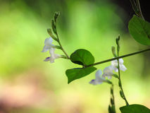 Small white flower, plants for natural background. Stock Photos