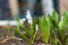 Small white flower. On a natural background Royalty Free Stock Images