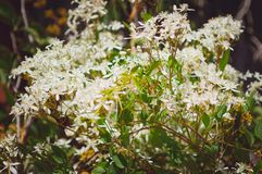 Small white flowers. Beautiful summer backdrop stock photography