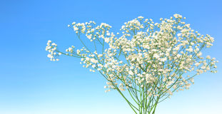Small white flowers in blue sky background. Small white flowers in light blue sky background Royalty Free Stock Image