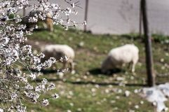 Little white flowers with shees behin stock image