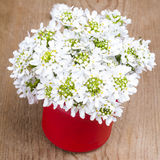 Small white flowers in jar Royalty Free Stock Images