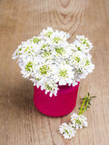 Small white flowers in jar Stock Photo