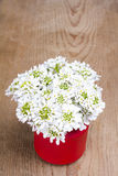 Small white flowers in jar Stock Photos