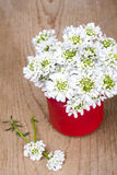 Small white flowers in jar Royalty Free Stock Photography