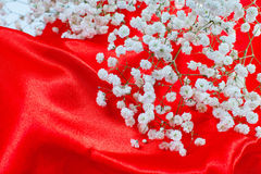Small white flowers on red satin Stock Image