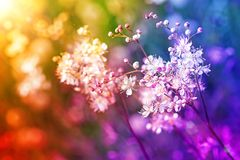 Small white flowers on a toned on gentle soft multicolor background. Outdoors close-up macro.Romantic soft gentle artistic image, free space for text Stock Image