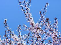 Small white flowers on a tree in full spring bloom stock images