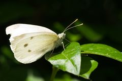 Small white on green leaf Stock Image