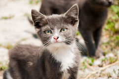 Small white-grey homeless cat with pink nose Royalty Free Stock Photography