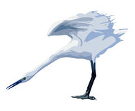 Small white heron. Spreads its wings Stock Image