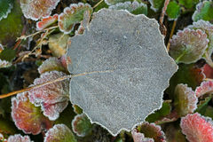 Small white ice crystals forming on green leaves in the morning Royalty Free Stock Photos