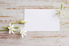Small white lilies Stock Images