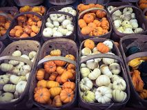 Small white and orange pumpkins. In wicker baskets Stock Images