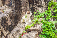 Small white puppy sitting on a stone Royalty Free Stock Images