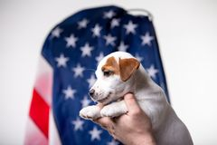 Small puppy with US flag on background stock photography