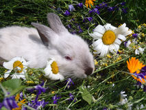 Small white rabbit in wild flowers Stock Images