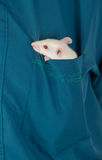 Small white rat Royalty Free Stock Images