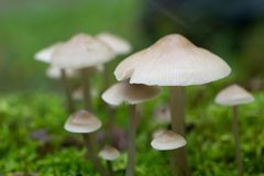 Small white saprotrophic mushrooms closeup Royalty Free Stock Image