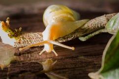 Small white snails Stock Photos