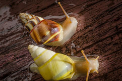 Small white snails Royalty Free Stock Photography
